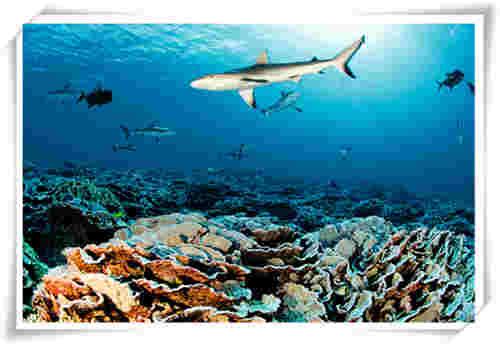 坚定的海洋事业践行者 宝珀Blancpain再度携手《经济学人》杂志举办第四届世界海洋峰会