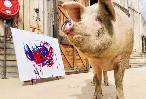 猪界毕加索的跨界之作?一头猪的能量竟如此强大